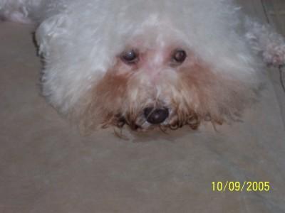 my dog Gabriel's face