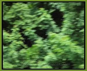 blurred leaves