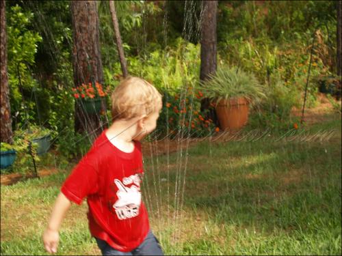 Roo in sprinkler