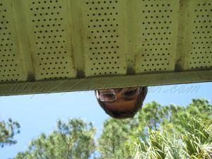 peeking bear