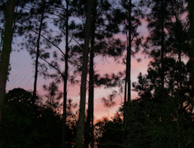 Florida sunset woods