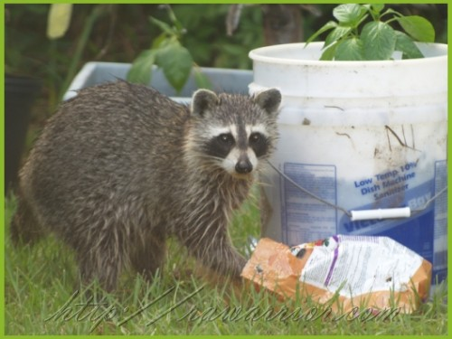 Racoon and Bone meal