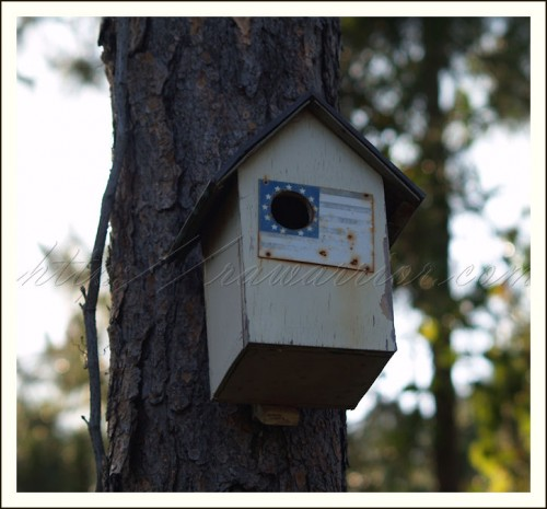 Patient centered medical home post birdhouse