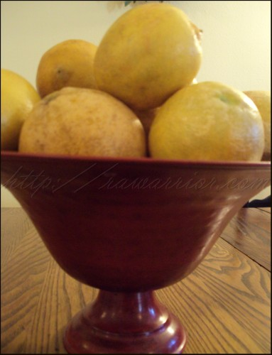 a gift of large Florida lemons
