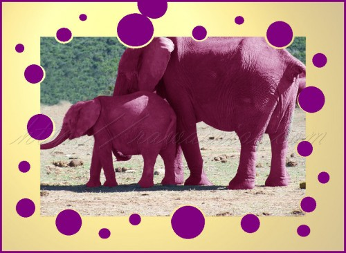 Pink or purple elephants