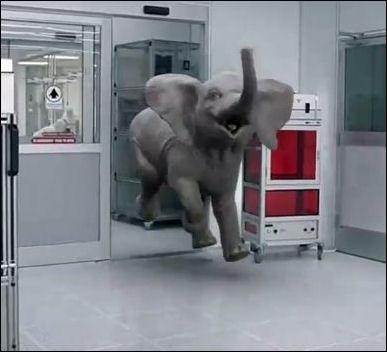 Elephant bounding into room